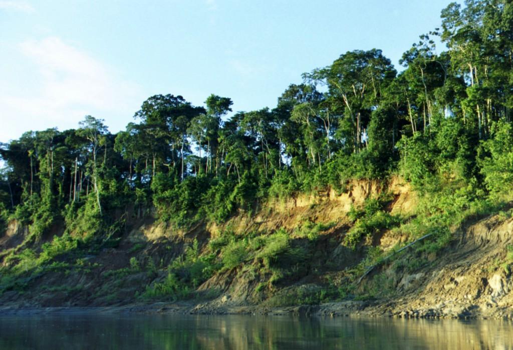 rio_selva
