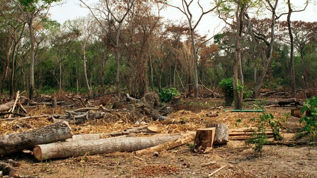 DEFORESTACION, TALA DE ARBOLES